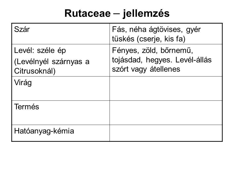 Rutaceae – jellemzés SzárFás, néha ágtövises, gyér tüskés (cserje, kis fa) Levél: széle ép (Levélnyél szárnyas a Citrusoknál) Fényes, zöld, bőrnemű, t
