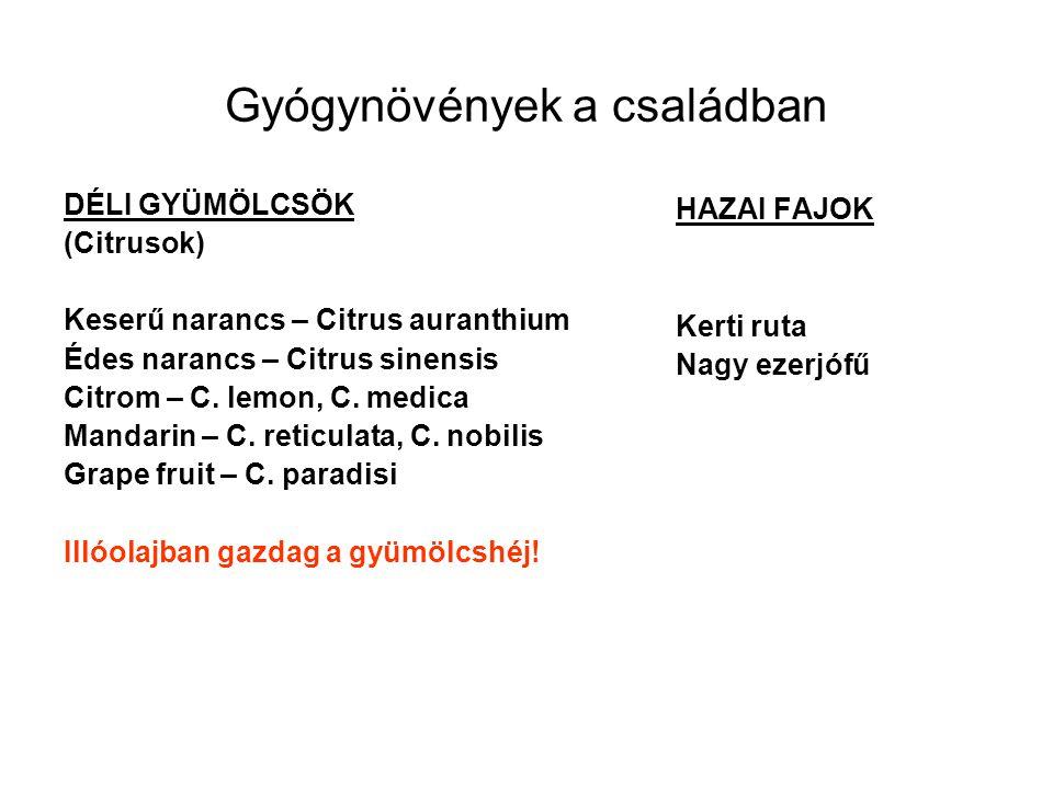 Gyógynövények a családban DÉLI GYÜMÖLCSÖK (Citrusok) Keserű narancs – Citrus auranthium Édes narancs – Citrus sinensis Citrom – C. lemon, C. medica Ma
