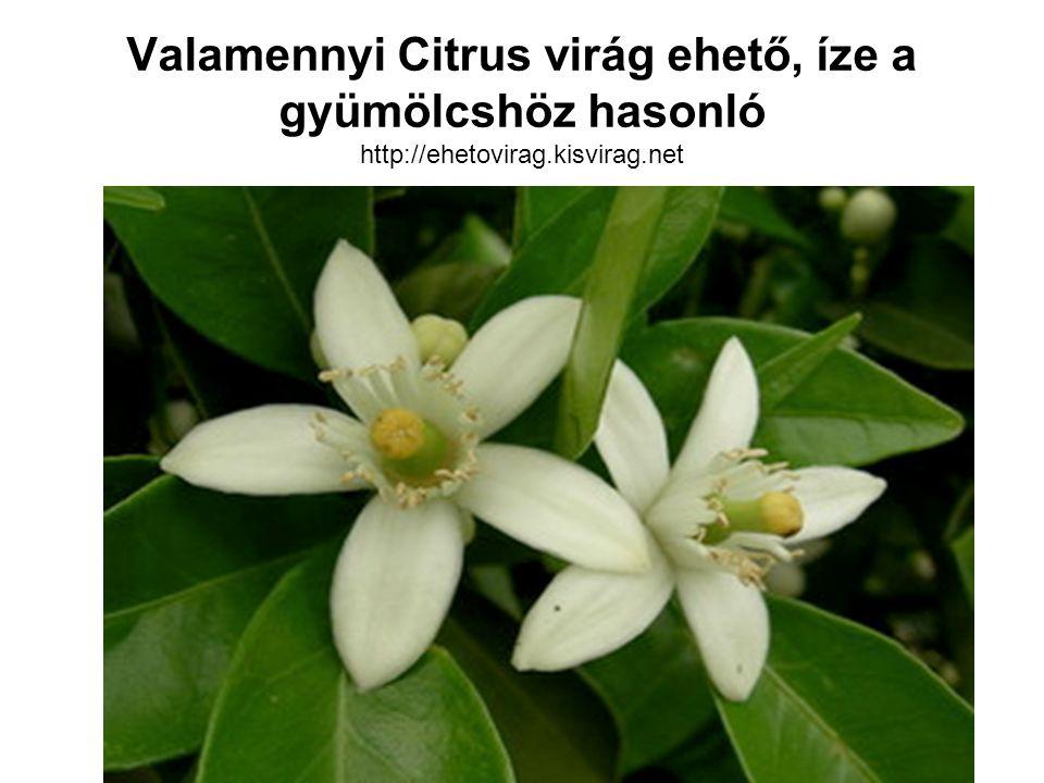 Valamennyi Citrus virág ehető, íze a gyümölcshöz hasonló http://ehetovirag.kisvirag.net