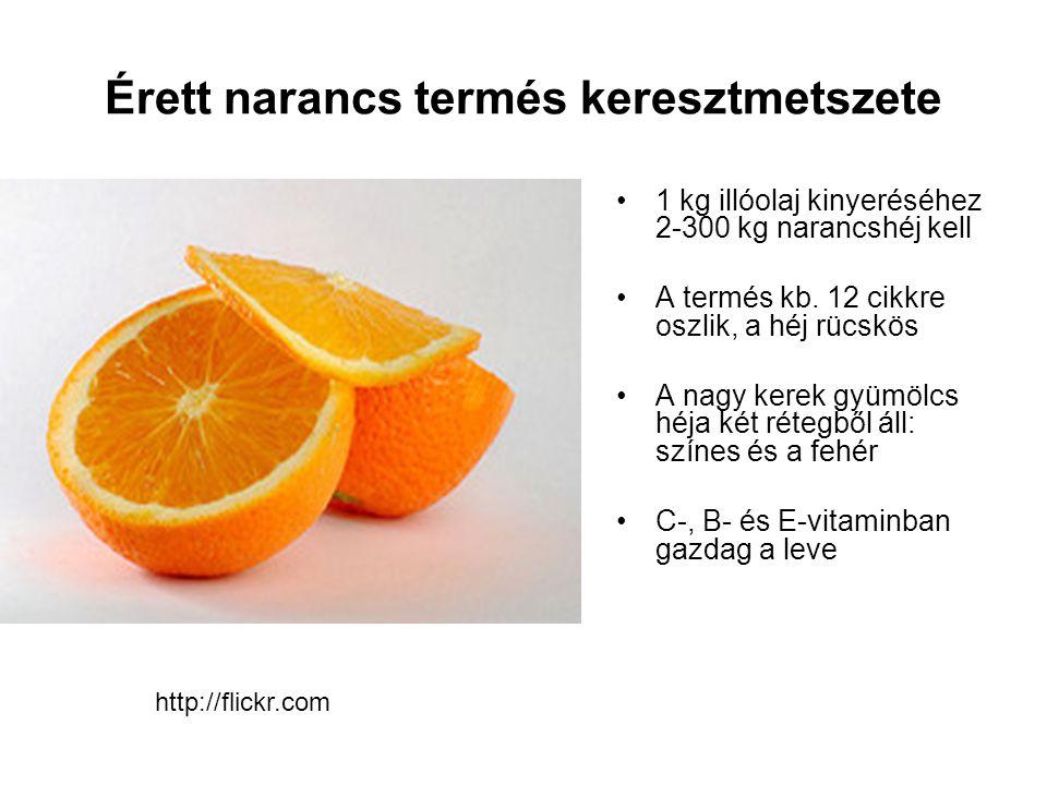 Érett narancs termés keresztmetszete http://flickr.com 1 kg illóolaj kinyeréséhez 2-300 kg narancshéj kell A termés kb. 12 cikkre oszlik, a héj rücskö
