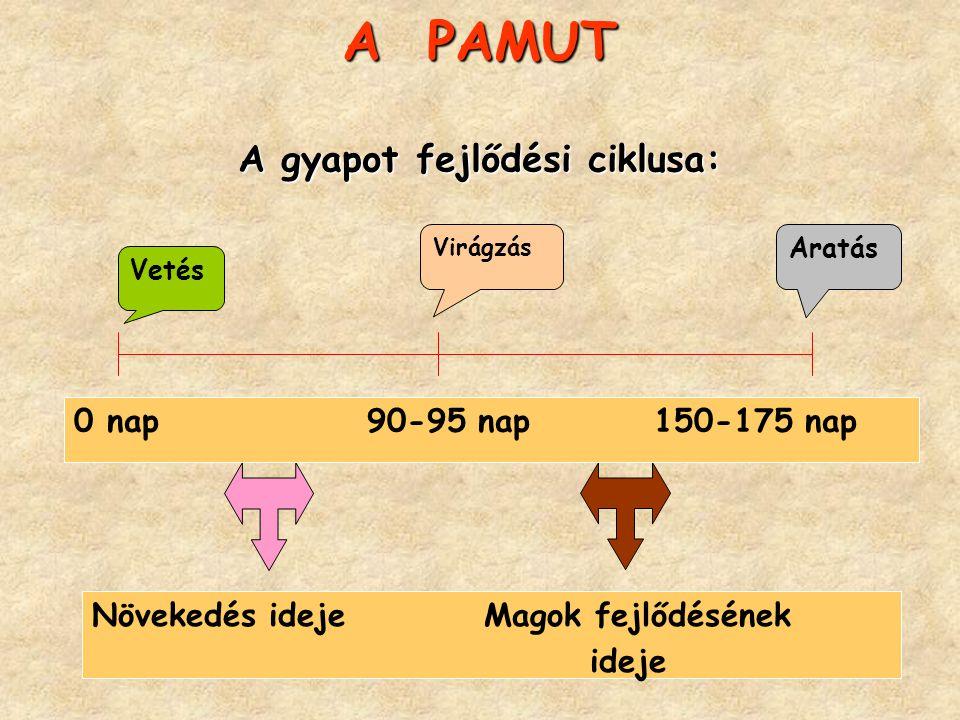 A PAMUT A gyapot fejlődési ciklusa: Vetés Virágzás Aratás 0 nap 90-95 nap 150-175 nap Növekedés ideje Magok fejlődésének ideje
