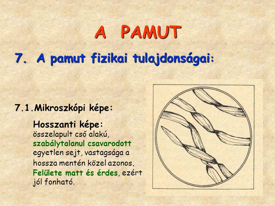 A PAMUT 7. A pamut fizikai tulajdonságai : 7.1.Mikroszkópi képe: Hosszanti képe: összelapult cső alakú, szabálytalanul csavarodott egyetlen sejt, vast