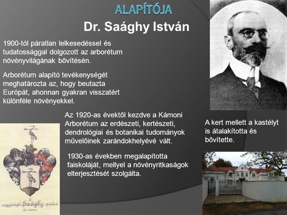 Dr. Saághy István 1900-tól páratlan lelkesedéssel és tudatossággal dolgozott az arborétum növényvilágának bővítésén. Arborétum alapító tevékenységét m