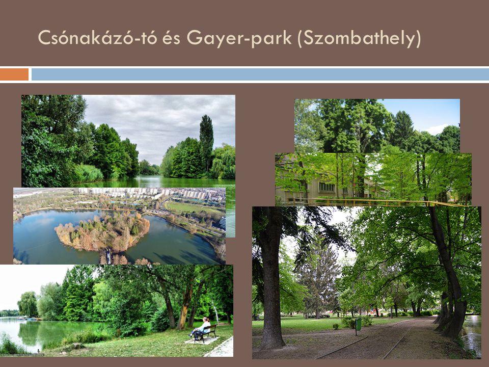 Csónakázó-tó és Gayer-park (Szombathely) Travels: Magyarország, Szombathely, Kámoni arborétum, SzG3 szalay3-travels.blogspot.com400 × 300Keresés kép a