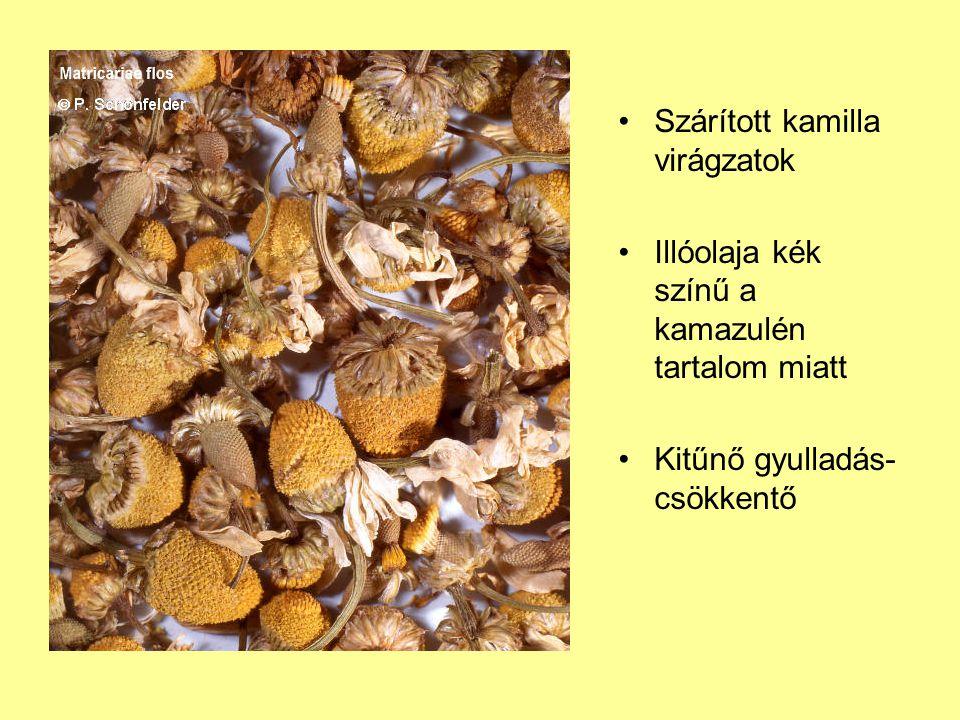 Szárított kamilla virágzatok Illóolaja kék színű a kamazulén tartalom miatt Kitűnő gyulladás- csökkentő