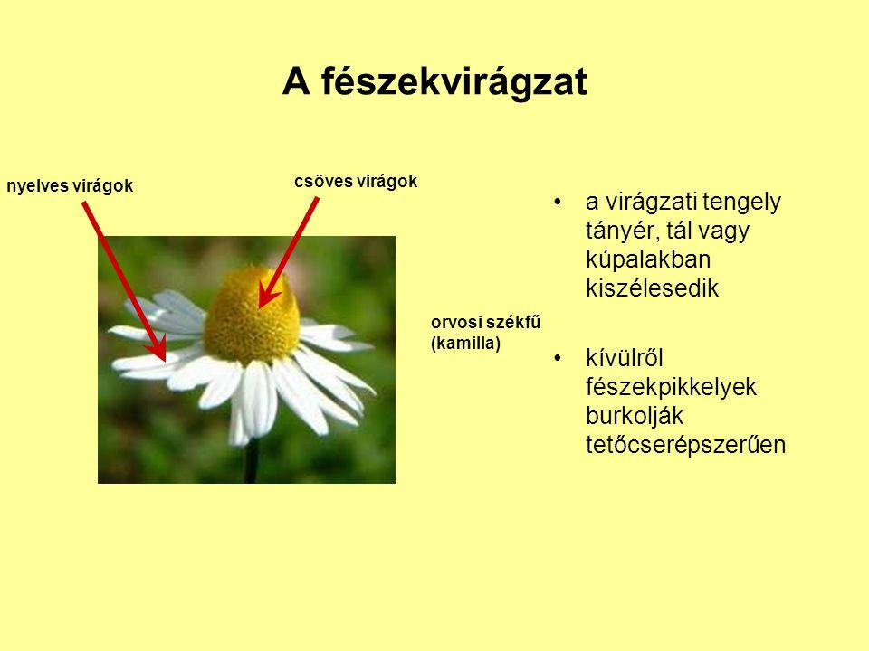 A fészekvirágzat a virágzati tengely tányér, tál vagy kúpalakban kiszélesedik kívülről fészekpikkelyek burkolják tetőcserépszerűen csöves virágok nyel