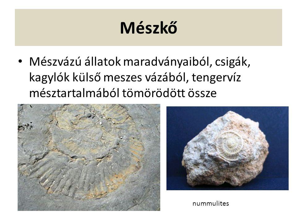 Mészkő Mészvázú állatok maradványaiból, csigák, kagylók külső meszes vázából, tengervíz mésztartalmából tömörödött össze nummulites