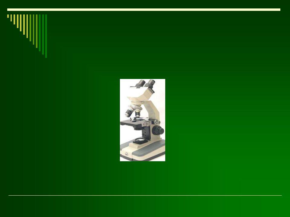 Fontosabb illóolaj-tartalmú növénycsaládok Lamiaceae pl.: Lavandula angustifolia, Mentha piperita Lamiaceae pl.: Lavandula angustifolia, Mentha piperita Apiaceae pl.: Carum carvi, Pimpinella anisum Apiaceae pl.: Carum carvi, Pimpinella anisum Asteraceae pl.: Chamomilla recutita Asteraceae pl.: Chamomilla recutita Myrtaceae pl.: Eucaliptus globolus Myrtaceae pl.: Eucaliptus globolus Rutaceae pl.: Citrus medica Rutaceae pl.: Citrus medica