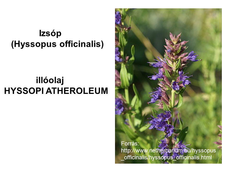 Forrás: http://www.netherbarium.hu/hyssopus _officinalis/hyssopus_officinalis.html Izsóp (Hyssopus officinalis) illóolaj HYSSOPI ATHEROLEUM