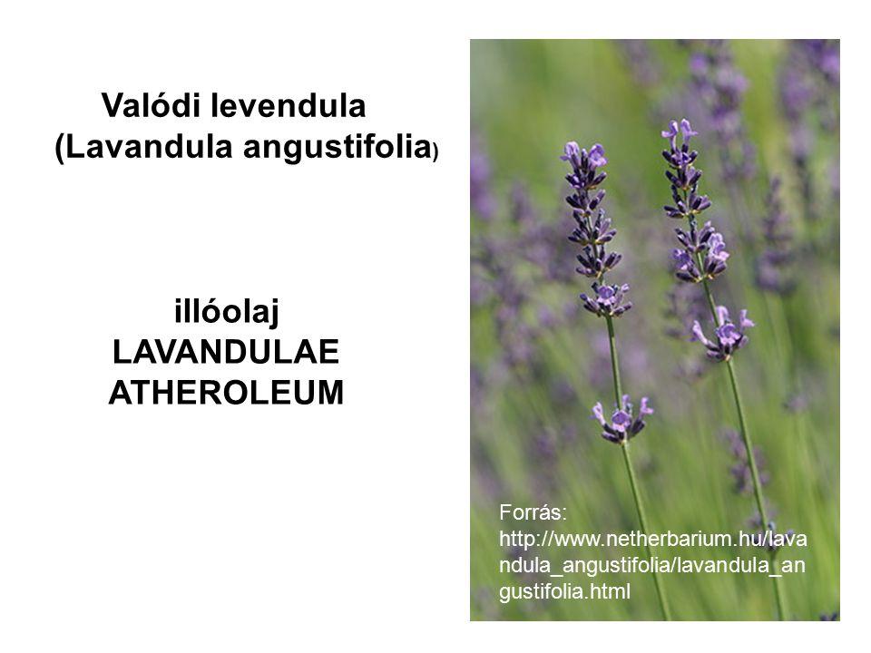 Forrás: http://www.netherbarium.hu/lava ndula_angustifolia/lavandula_an gustifolia.html Valódi levendula (Lavandula angustifolia ) illóolaj LAVANDULAE ATHEROLEUM