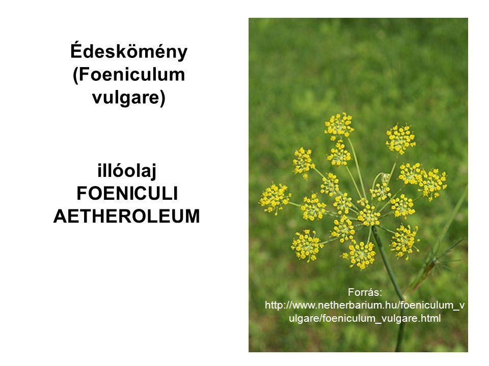 Édeskömény (Foeniculum vulgare) illóolaj FOENICULI AETHEROLEUM Forrás: http://www.netherbarium.hu/foeniculum_v ulgare/foeniculum_vulgare.html