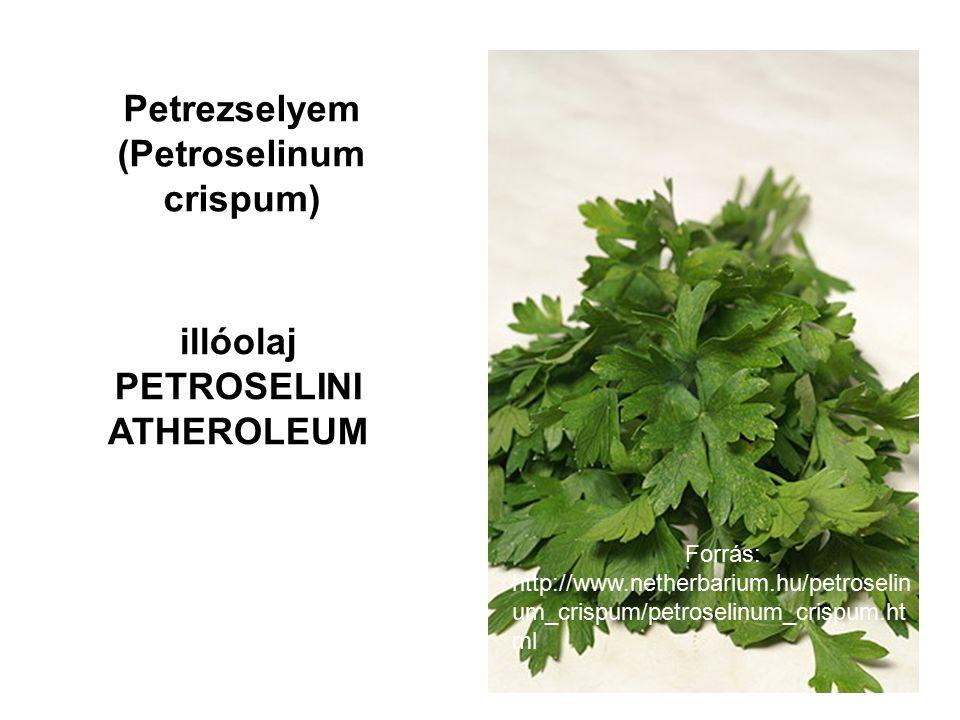 Petrezselyem (Petroselinum crispum) illóolaj PETROSELINI ATHEROLEUM Forrás: http://www.netherbarium.hu/petroselin um_crispum/petroselinum_crispum.ht ml