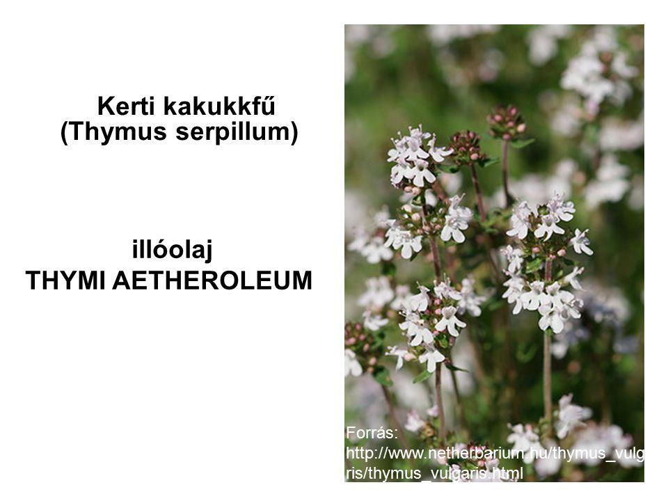 Kerti kakukkfű (Thymus serpillum) illóolaj THYMI AETHEROLEUM Forrás: http://www.netherbarium.hu/thymus_vulga ris/thymus_vulgaris.html