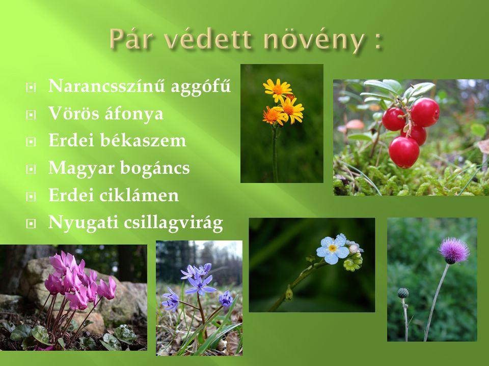 A fauna az állati élet összessége egy adott területen vagy időszakon belül.
