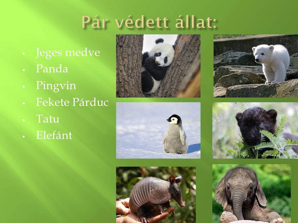 Jeges medve Panda Pingvin Fekete Párduc Tatu Elefánt