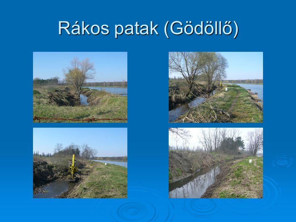Rákos patak (Gödöllő)