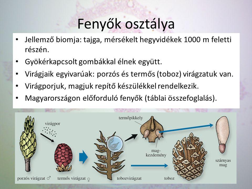 Fenyők osztálya Jellemző biomja: tajga, mérsékelt hegyvidékek 1000 m feletti részén. Gyökérkapcsolt gombákkal élnek együtt. Virágjaik egyivarúak: porz
