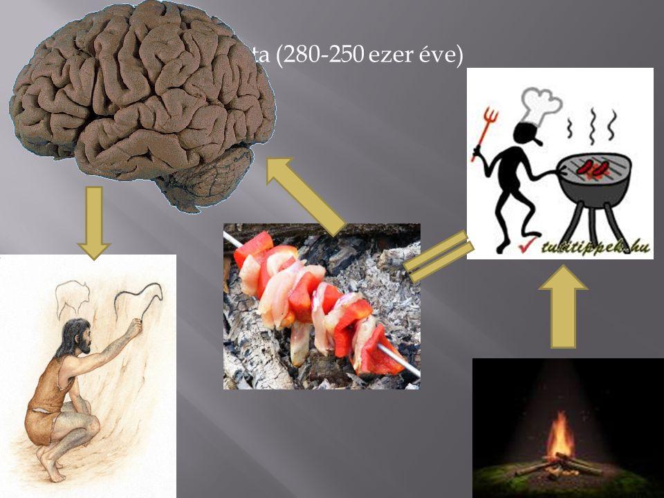 II. A tűz használata (280-250 ezer éve)