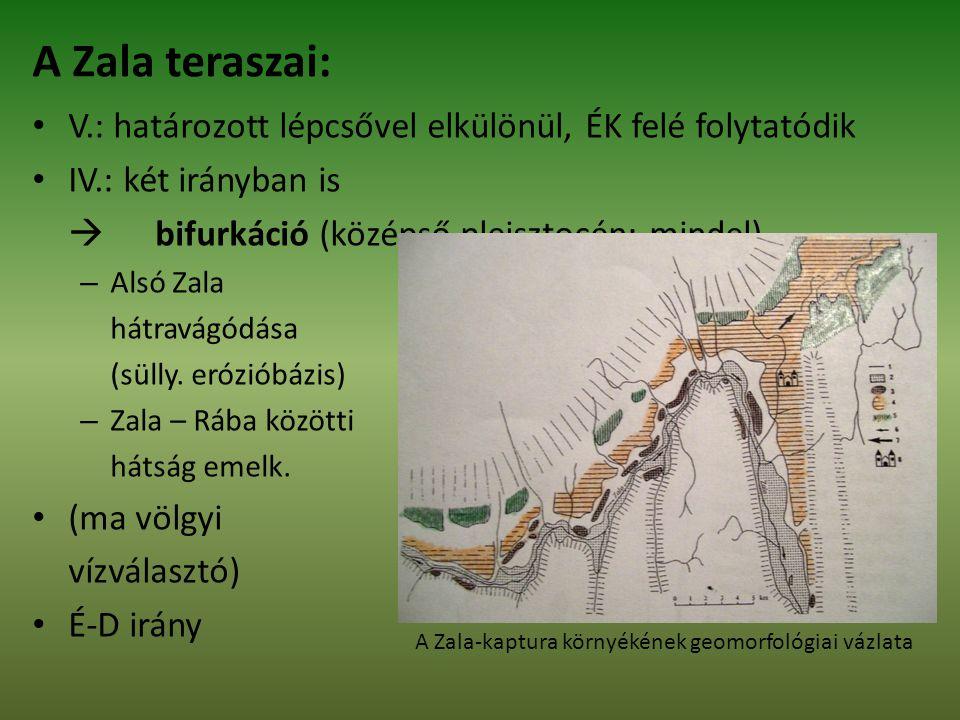 V.: határozott lépcsővel elkülönül, ÉK felé folytatódik IV.: két irányban is  bifurkáció (középső pleisztocén: mindel) – Alsó Zala hátravágódása (sülly.