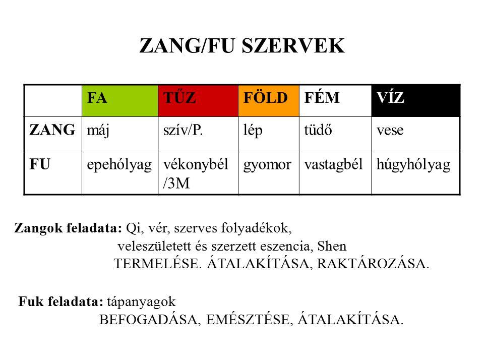 ZANG/FU SZERVEK FATŰZFÖLDFÉMVÍZ ZANGmájszív/P.léptüdővese FUepehólyagvékonybél /3M gyomorvastagbélhúgyhólyag Zangok feladata: Qi, vér, szerves folyadékok, veleszületett és szerzett eszencia, Shen TERMELÉSE.