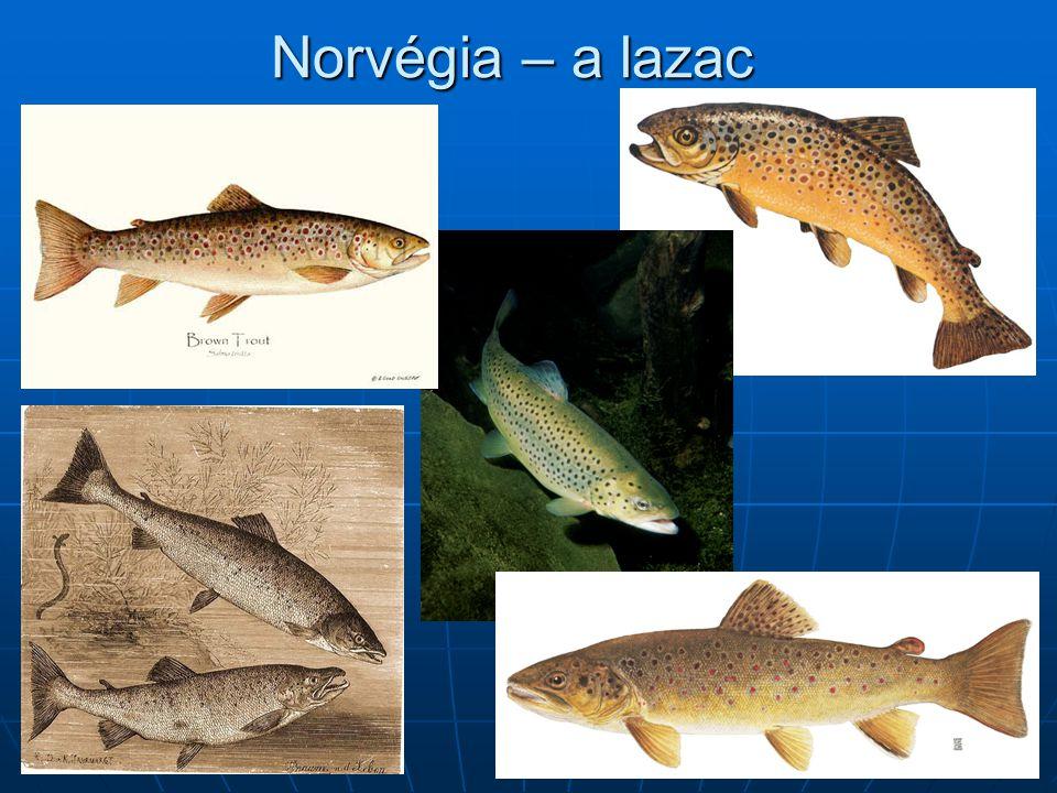 Norvégia – a lazac