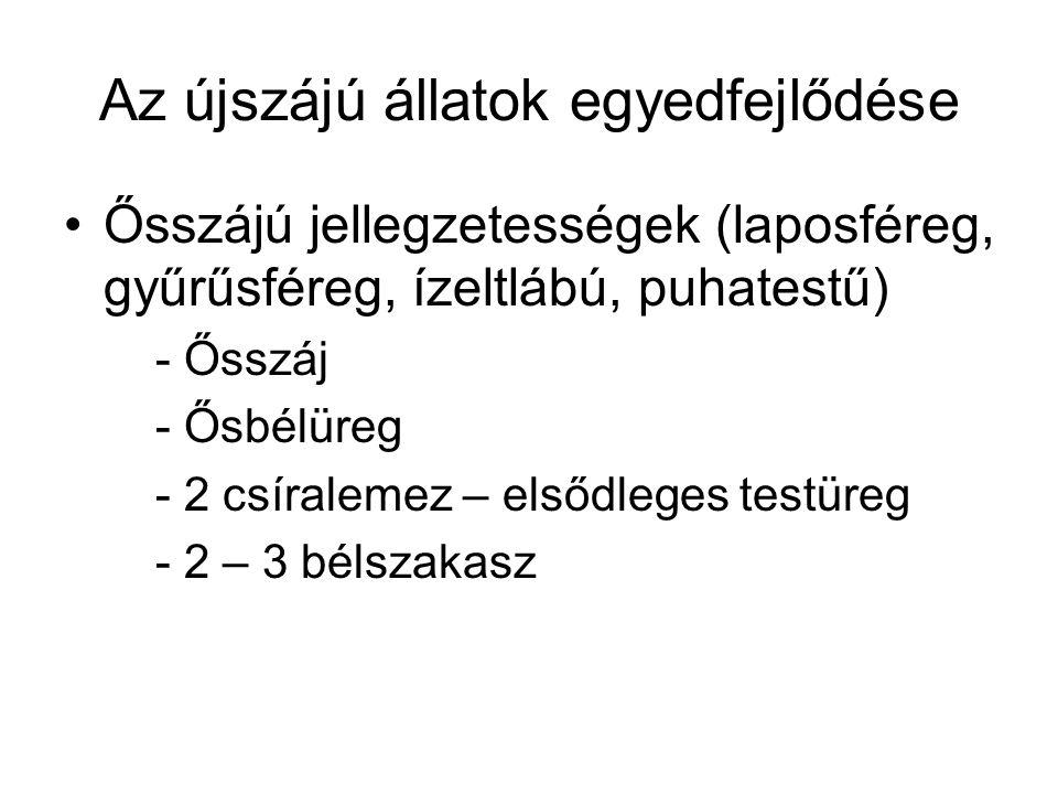 Az újszájú állatok egyedfejlődése Ősszájú jellegzetességek (laposféreg, gyűrűsféreg, ízeltlábú, puhatestű) - Ősszáj - Ősbélüreg - 2 csíralemez – elsőd