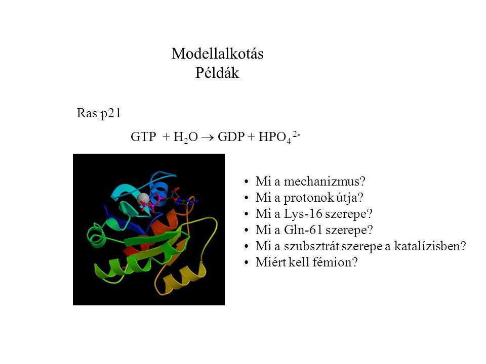 Modellalkotás Példák Ras p21 GTP + H 2 O  GDP + HPO 4 2- Mi a mechanizmus.