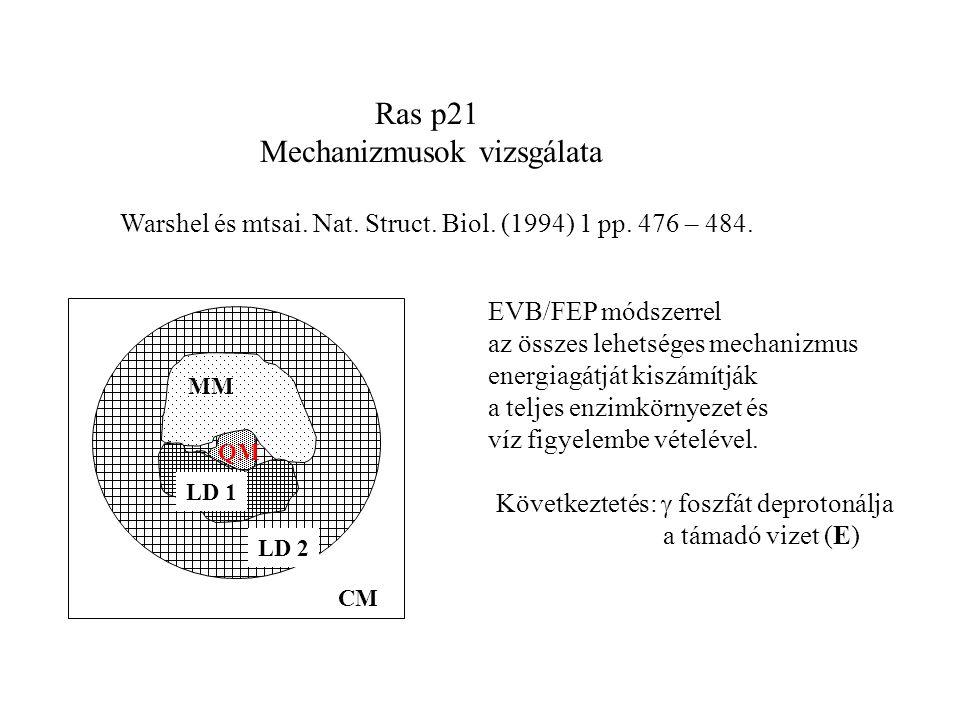 Ras p21 Mechanizmusok vizsgálata Warshel és mtsai.