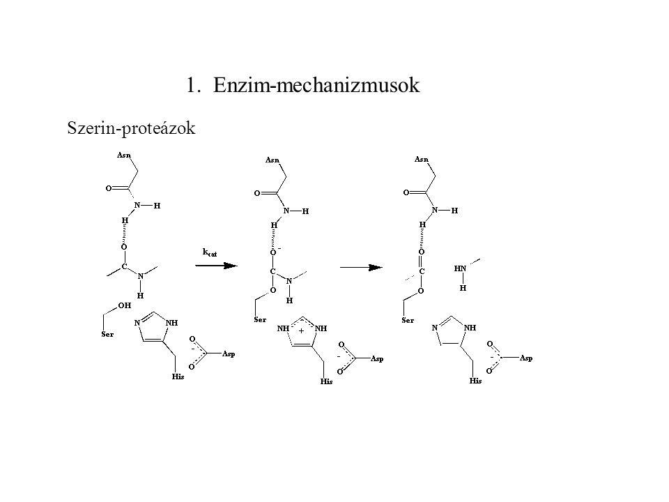 Enzim-mechanizmusok Problémák Mechanizmus reakciólépések pontos leírása reakcióban közvetlenül résztvevő oldalláncok sebességmeghatározó lépés azonosítása Katalízis értelmezése (miért gyorsabb, mint oldatban) reaktánsok közel vannak más a stabil konformáció (sztérikus stressz) aktív centrum közreműködése (pl.