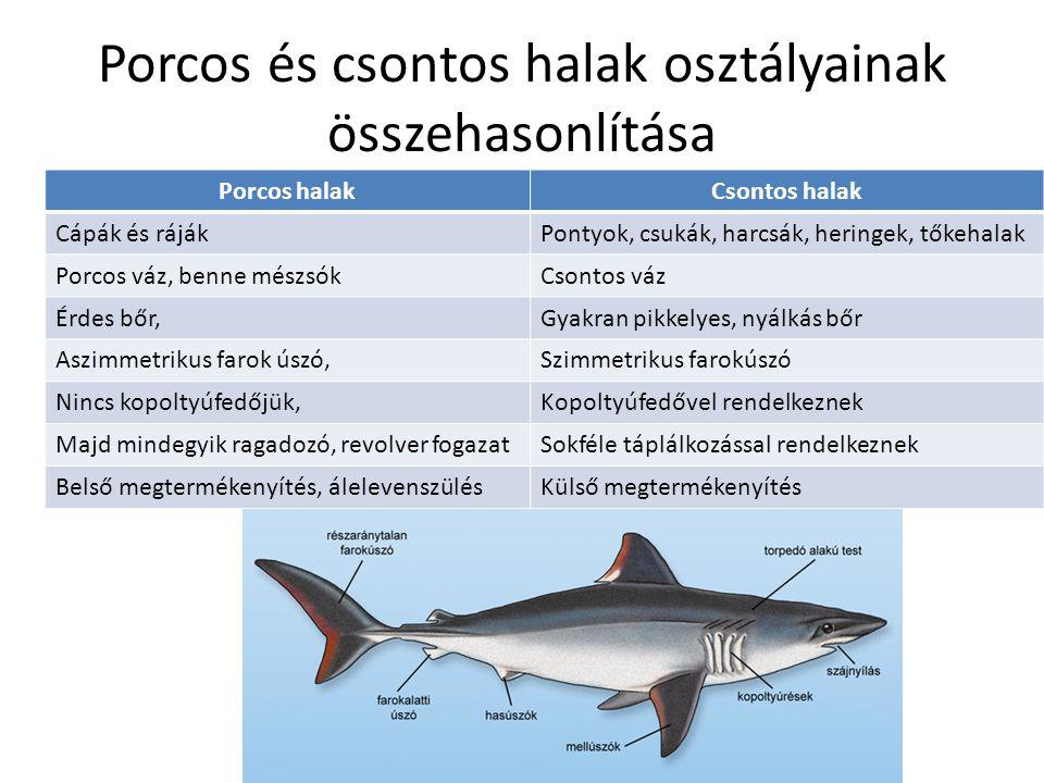 Porcos és csontos halak osztályainak összehasonlítása Porcos halakCsontos halak Cápák és rájákPontyok, csukák, harcsák, heringek, tőkehalak Porcos váz