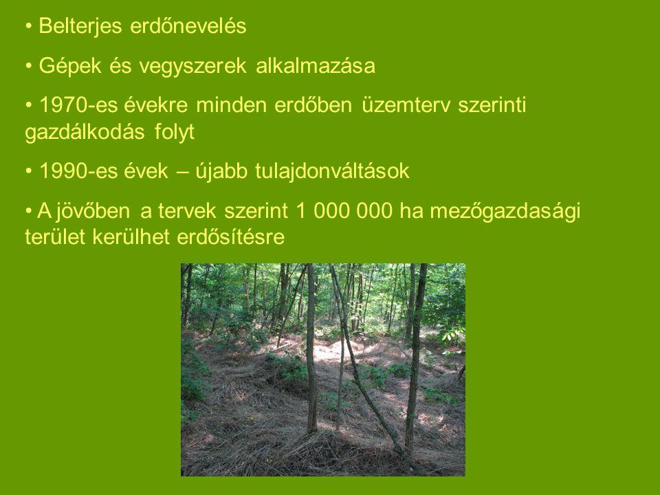 Belterjes erdőnevelés Gépek és vegyszerek alkalmazása 1970-es évekre minden erdőben üzemterv szerinti gazdálkodás folyt 1990-es évek – újabb tulajdonváltások A jövőben a tervek szerint 1 000 000 ha mezőgazdasági terület kerülhet erdősítésre