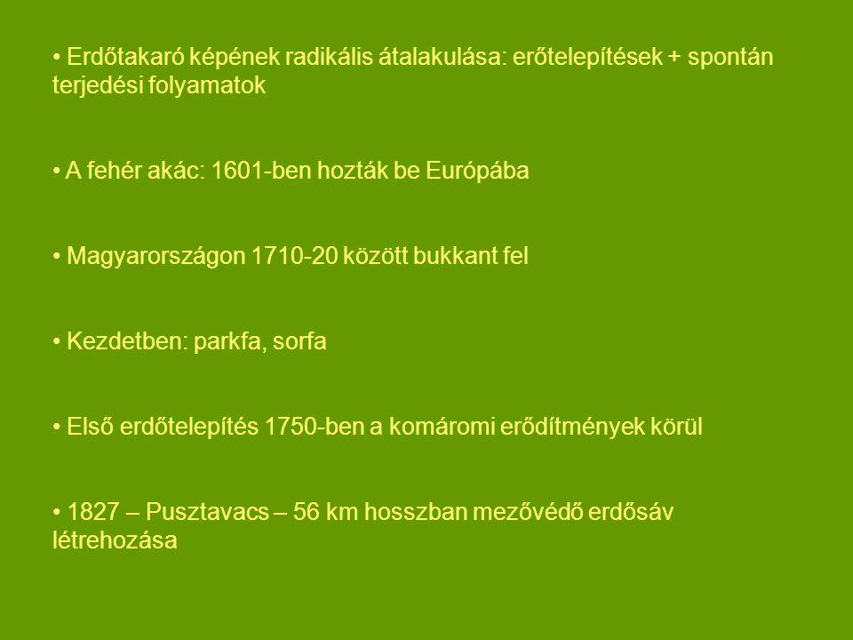 Erdőtakaró képének radikális átalakulása: erőtelepítések + spontán terjedési folyamatok A fehér akác: 1601-ben hozták be Európába Magyarországon 1710-20 között bukkant fel Kezdetben: parkfa, sorfa Első erdőtelepítés 1750-ben a komáromi erődítmények körül 1827 – Pusztavacs – 56 km hosszban mezővédő erdősáv létrehozása