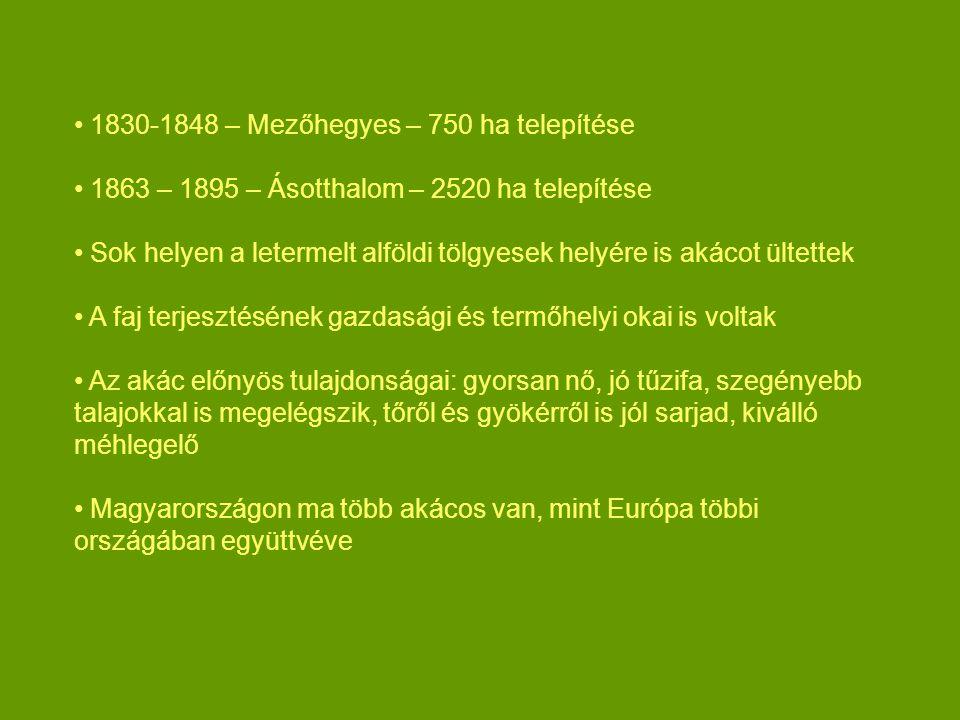 1830-1848 – Mezőhegyes – 750 ha telepítése 1863 – 1895 – Ásotthalom – 2520 ha telepítése Sok helyen a letermelt alföldi tölgyesek helyére is akácot ültettek A faj terjesztésének gazdasági és termőhelyi okai is voltak Az akác előnyös tulajdonságai: gyorsan nő, jó tűzifa, szegényebb talajokkal is megelégszik, tőről és gyökérről is jól sarjad, kiválló méhlegelő Magyarországon ma több akácos van, mint Európa többi országában együttvéve
