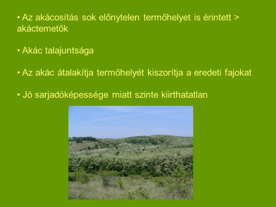 Az akácosítás sok előnytelen termőhelyet is érintett > akáctemetők Akác talajuntsága Az akác átalakítja termőhelyét kiszorítja a eredeti fajokat Jó sarjadóképessége miatt szinte kiirthatatlan