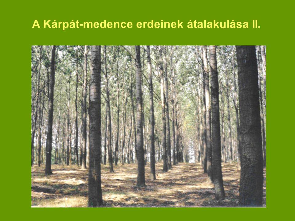 A Kárpát-medence erdeinek átalakulása II.