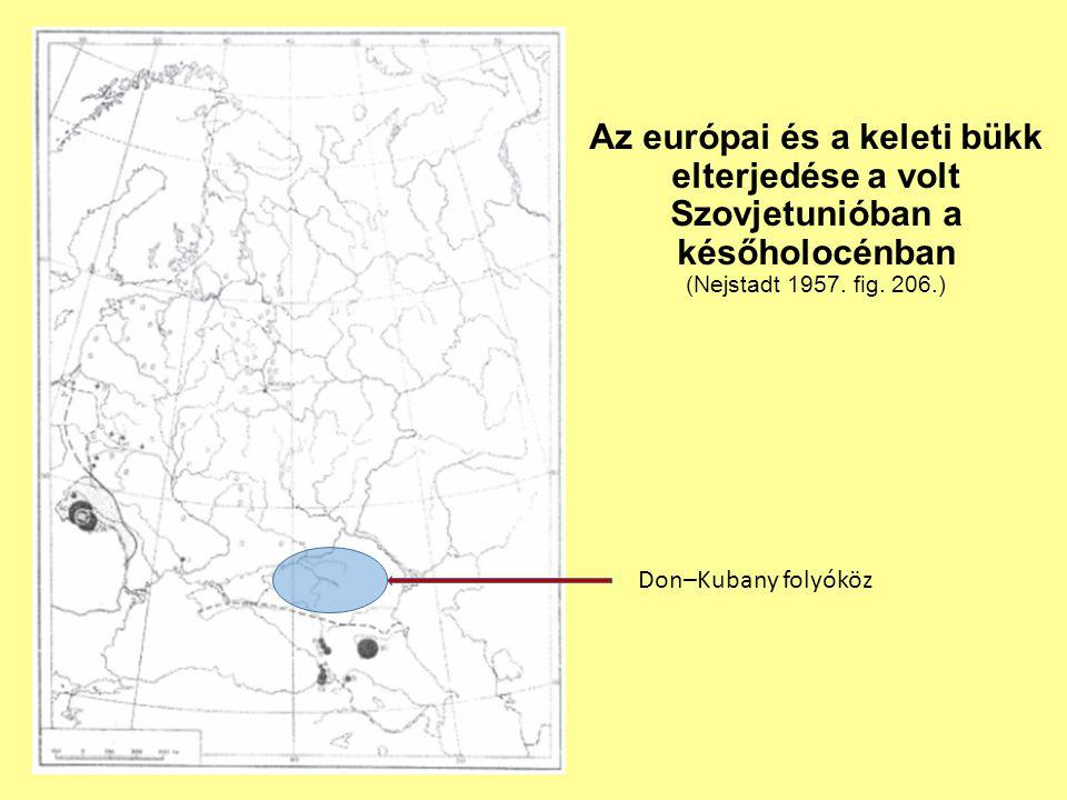 Az európai és a keleti bükk elterjedése a volt Szovjetunióban a későholocénban (Nejstadt 1957. fig. 206.) Don–Kubany folyóköz