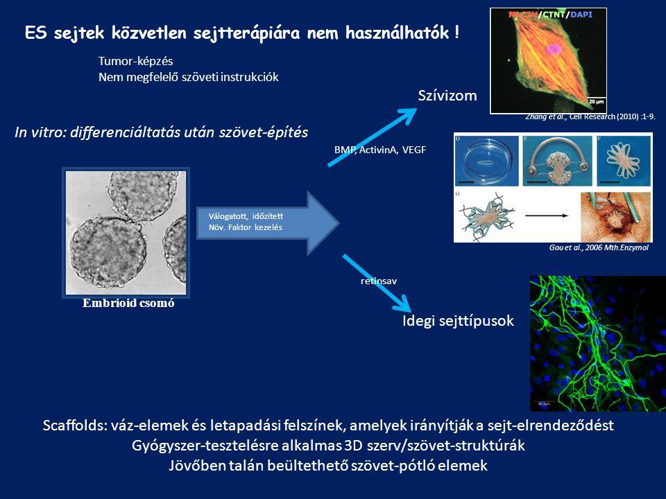 Embrioid csomó Válogatott, időzített Növ. Faktor kezelés BMP, ActivinA, VEGF Gou et al., 2006 Mth.Enzymol retinsav Szívizom Idegi sejttípusok Scaffold