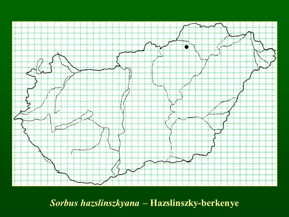 Sorbus hazslinszkyana – Hazslinszky-berkenye