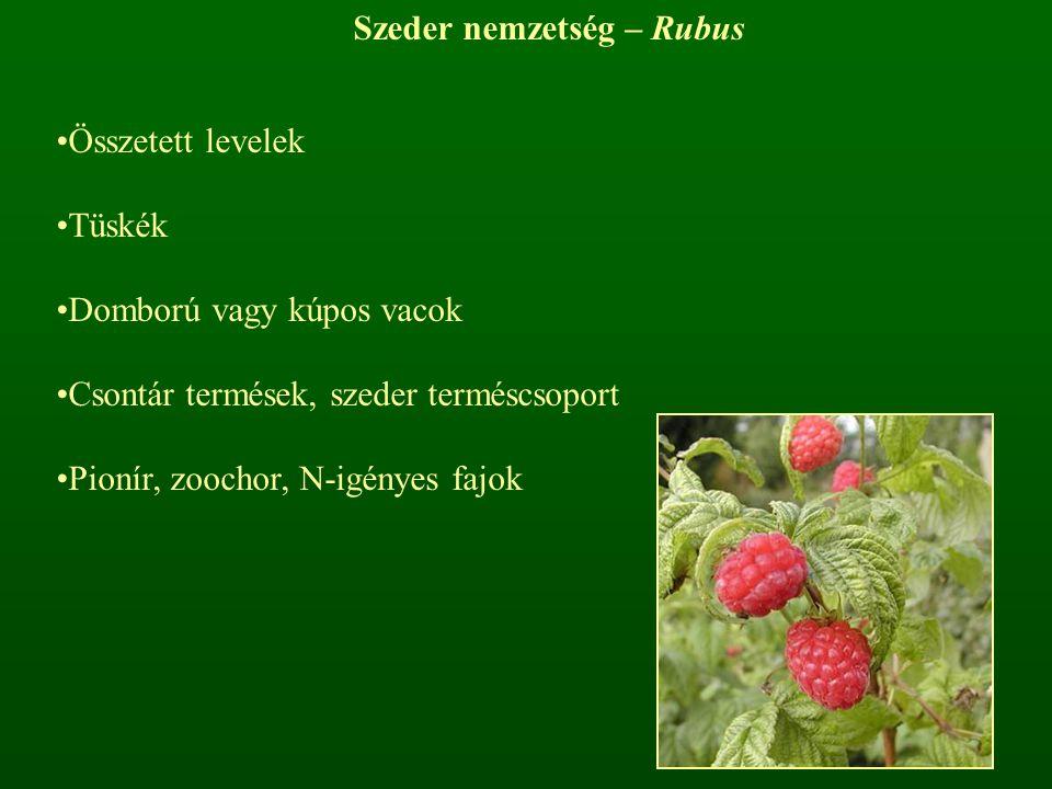 Szeder nemzetség – Rubus Összetett levelek Tüskék Domború vagy kúpos vacok Csontár termések, szeder terméscsoport Pionír, zoochor, N-igényes fajok