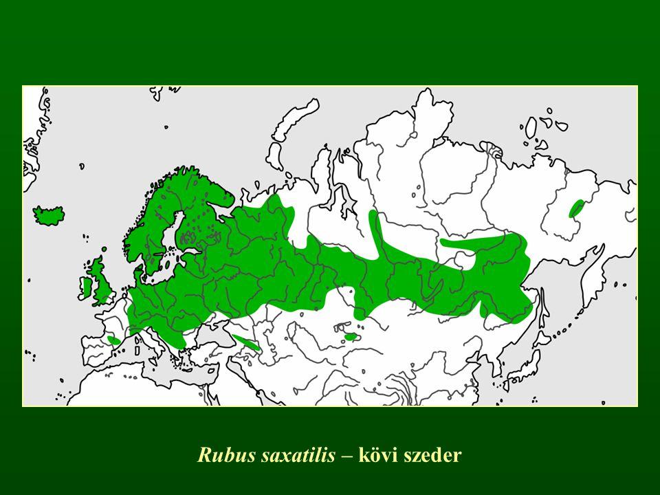 Rubus saxatilis – kövi szeder