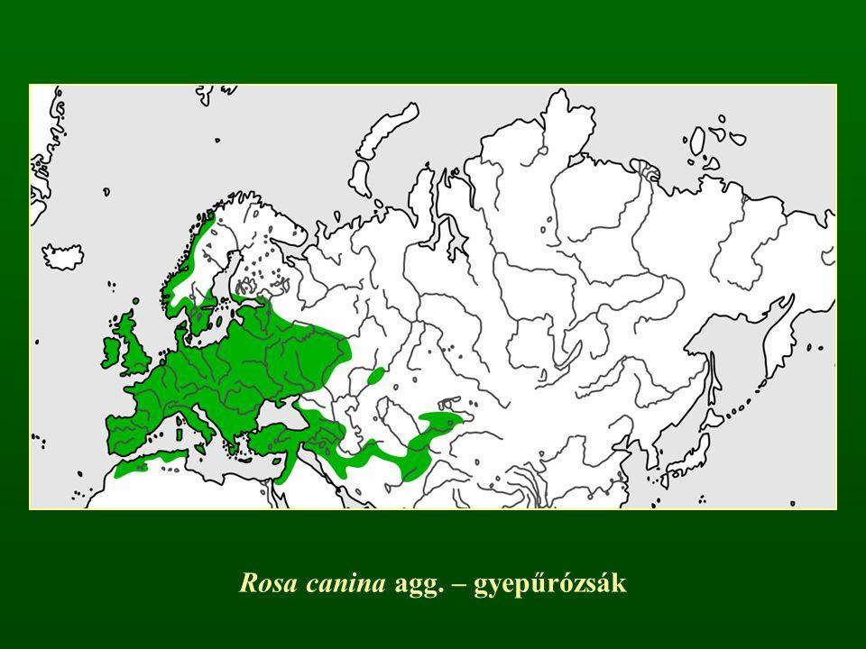 Rosa canina agg. – gyepűrózsák