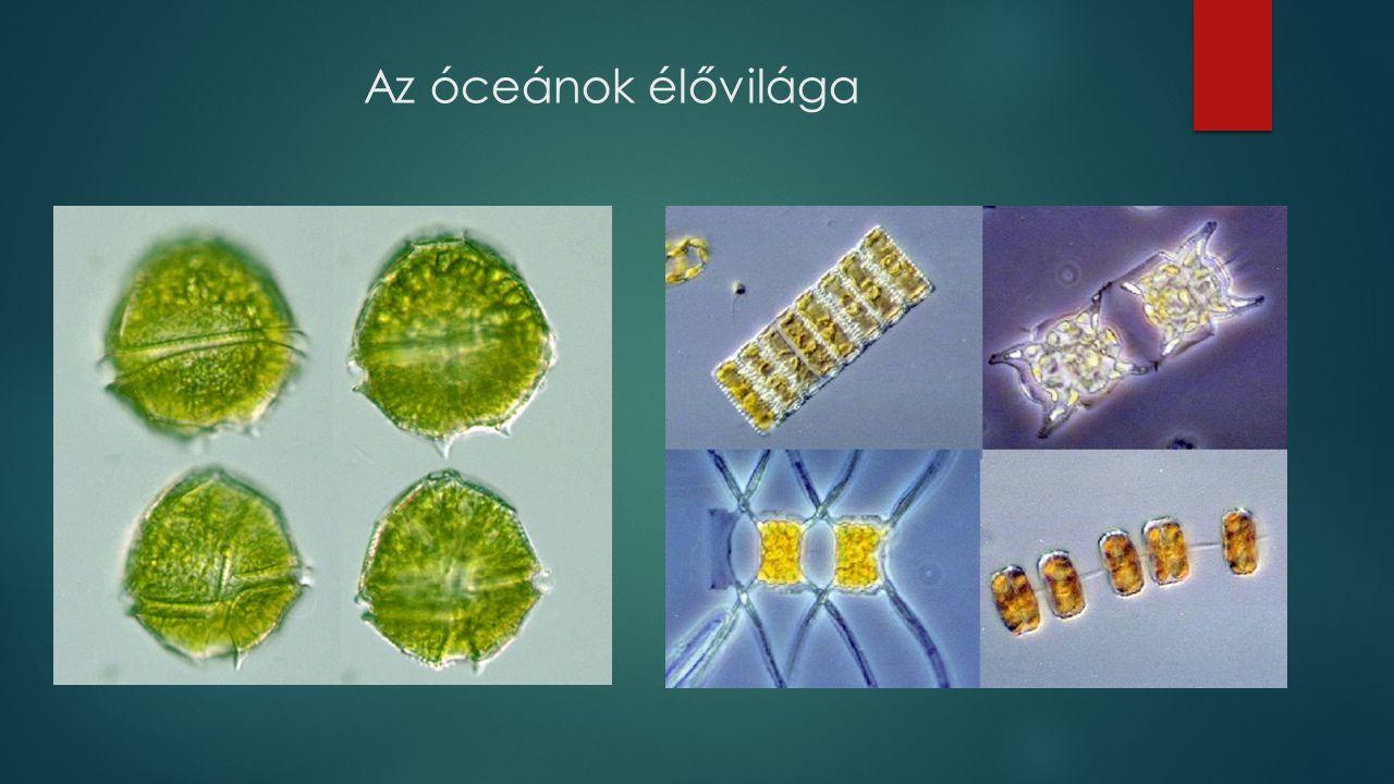 Az óceánok élővilága