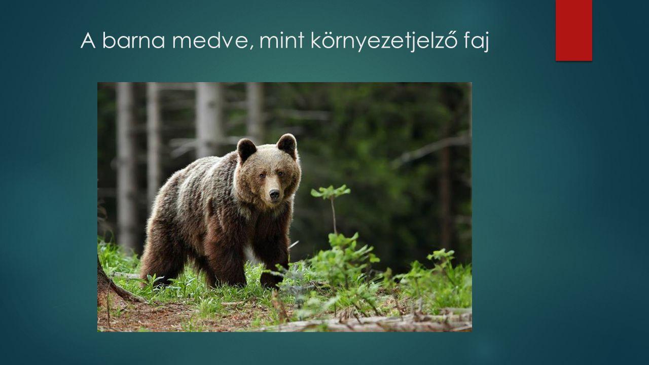 A barna medve, mint környezetjelző faj
