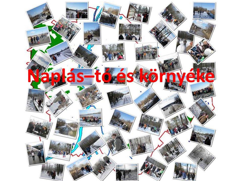 Ide kattintva a kiadványok letölthetők pdf formátumba az MTVSZ honlapjáról http://www.mtvsz.hu/kiadvanyokkiadványok letölthetők pdf formátumba http://www.mtvsz.hu/kiadvanyok
