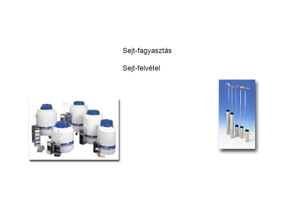 Sejt-fagyasztás Sejt-felvétel