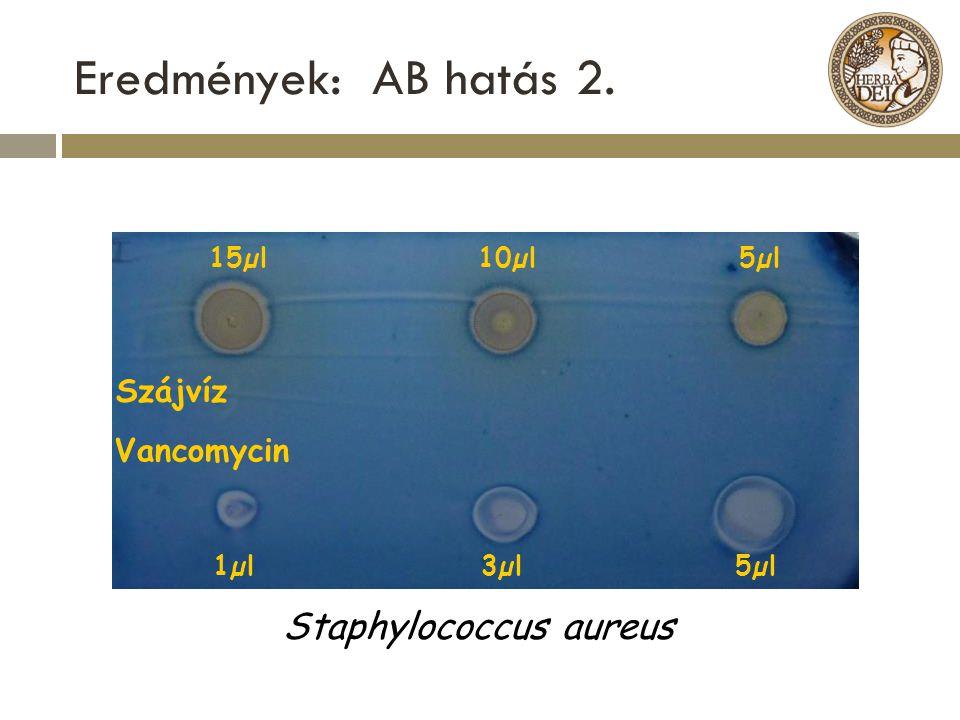 Eredmények: AB hatás 2. 15µl10µl 5µl 1µl 3µl 5µl Szájvíz Vancomycin Staphylococcus aureus