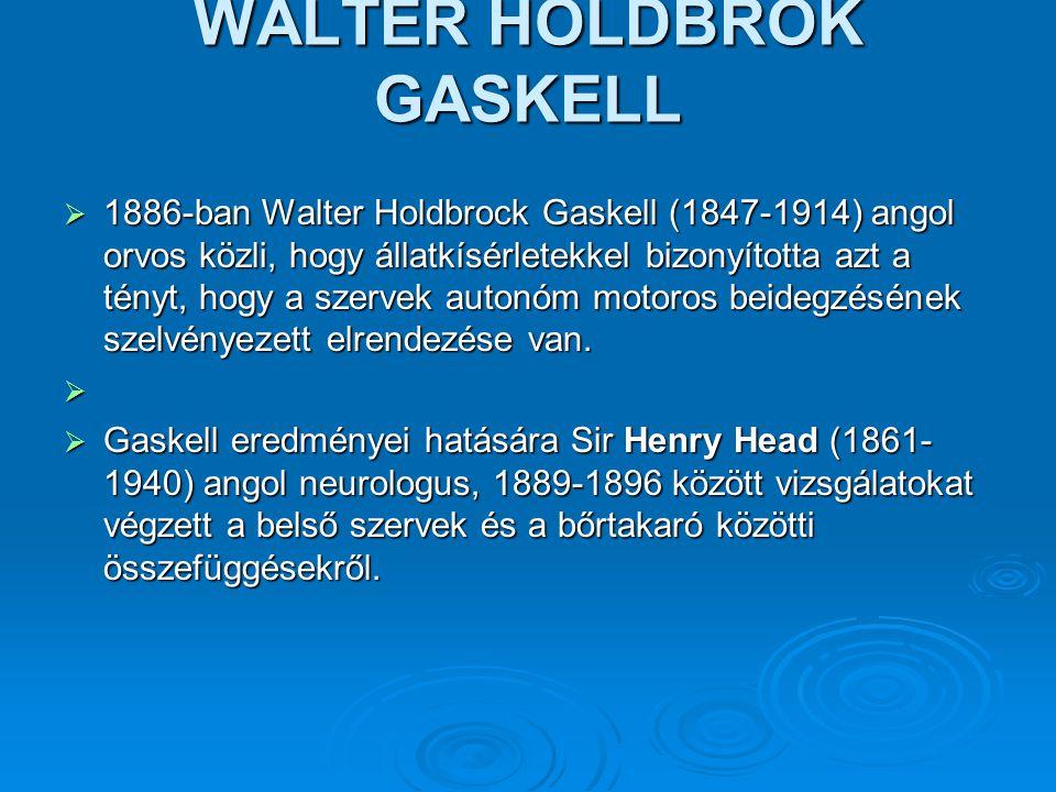 WALTER HOLDBROK GASKELL  1886-ban Walter Holdbrock Gaskell (1847-1914) angol orvos közli, hogy állatkísérletekkel bizonyította azt a tényt, hogy a sz