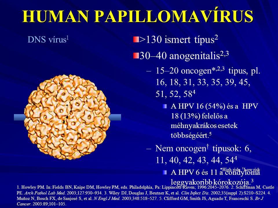HUMAN PAPILLOMAVÍRUS >130 ismert típus 2 30–40 anogenitalis 2,3 –15–20 oncogen*,2,3 tipus, pl. 16, 18, 31, 33, 35, 39, 45, 51, 52, 58 4 A HPV 16 (54%)