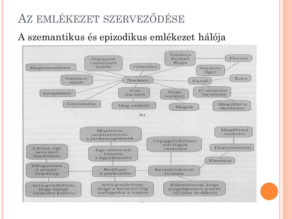 A Z EMLÉKEZET SZERVEZŐDÉSE A szemantikus és epizodikus emlékezet hálója