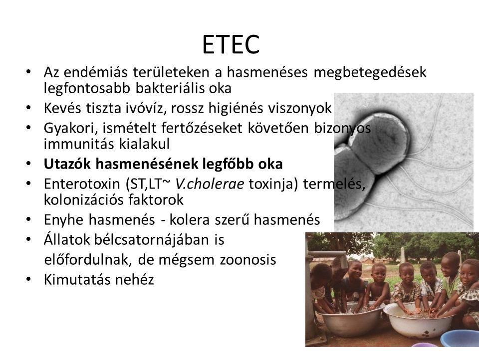 ETEC Az endémiás területeken a hasmenéses megbetegedések legfontosabb bakteriális oka Kevés tiszta ivóvíz, rossz higiénés viszonyok Gyakori, ismételt